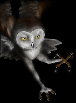 Coloured owl by agree-to-dissagree