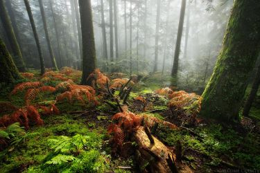 Feeling Forest's Soul by MaximeCourty