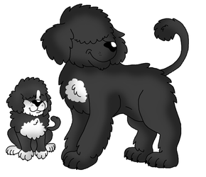 Portuguese Pooches by StretchNSnort