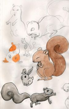 Squirrels by lylah-rose