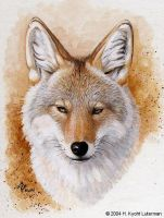 Coyote Portrait by kyoht