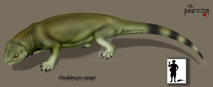 Oedaleops campi by Theropsida