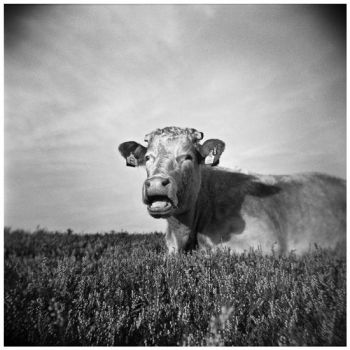 Holga 029 by my-plastic-eye