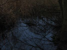 Swamp Reflections by Rylius