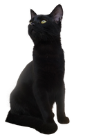 Cat 01 - PNG by Altair-E-Stock