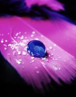 Blue vs Pink waterdrop by KatherineDavis