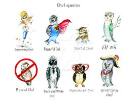 Owl Species by Redilion