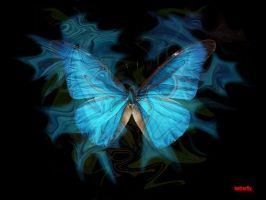 butterfly blue by klimo