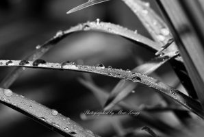 Drops, just drops...7 by MarcZingg