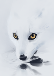 Snow | Real time video process on Patreon by Martith
