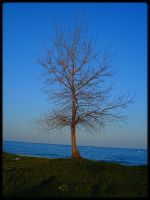 This seaside tree by TheSkyEtc