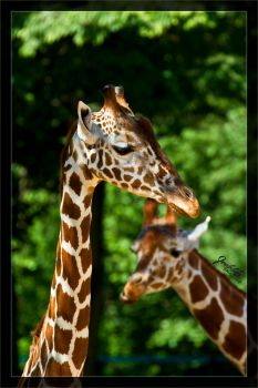 Long neck by deaconfrost78
