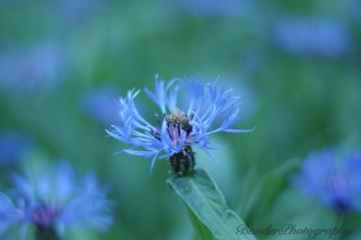 Blue Beauty 2 by tlbauder1987