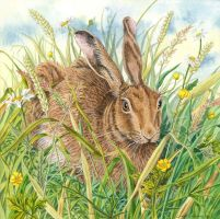Brown Hare by LynneHendersonArt