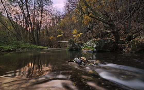 Autumn morning by draganea