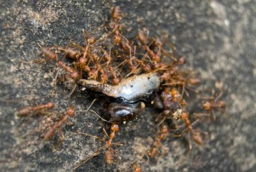 Ant Attack by eMDay