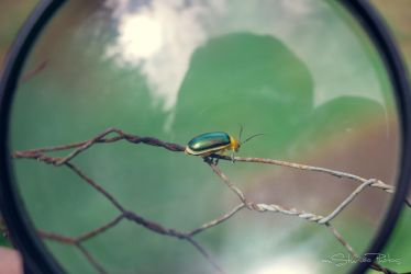 Insect by EMSTURIAO