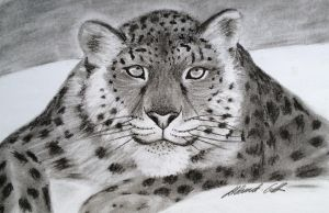 Snow leopard by Udvardi