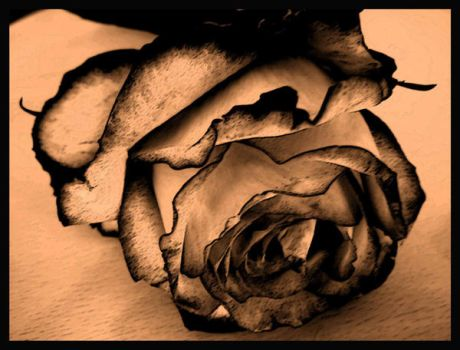 Rose by Haziness