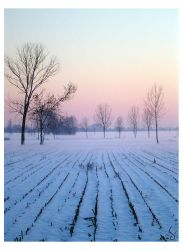 Winter at home_purity by sophismi