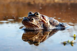 Four frogs by rosaarvensis