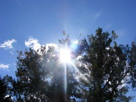 beautiful sun, sky and trees by BlueIvyViolet