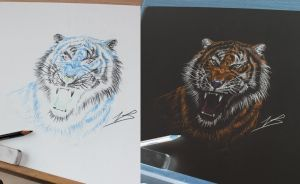 Tiger Inverted by piratebutl23