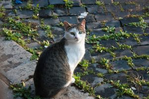 alley cats of Rome 2 by Rheis