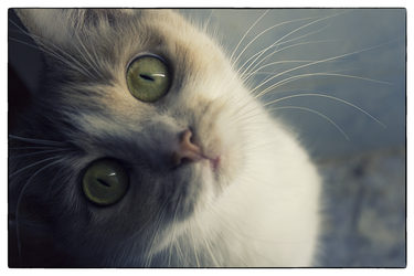 My cat 2 by TRIS31