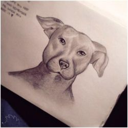 American Blue Nose Pitbull for my favorite Inmate by christiee61