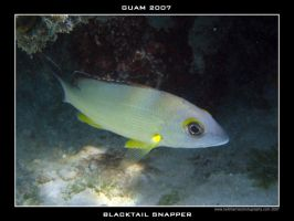 Guam 5 - Blacktail Snapper by Keith-Killer