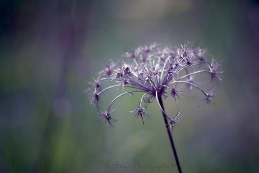 Last Year's Lace by K-Boyd-Photography