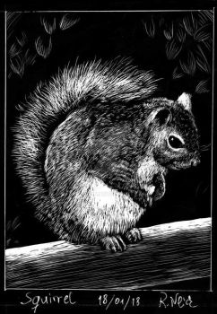New York Squirrel by RoodyN