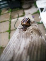 snail by skykeys