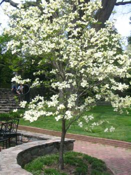 Longwood Gardens: 58 by jr----fave-resources