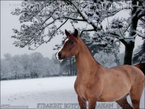 Purchased Arab by Foreverrodeo