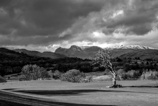 The tree - Lake district by aglezerman