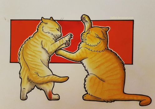 Cat fight by Safikei