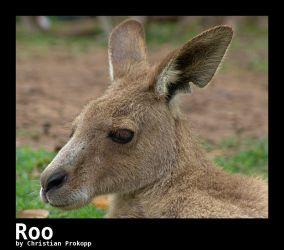 Roo by r4tm