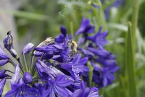 Flowers + bee by jomy10