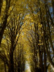 Walk Under The Trees by Edledhron