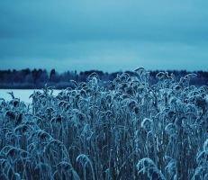 Winter Blue by Peterix