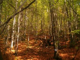 Forest by Venea
