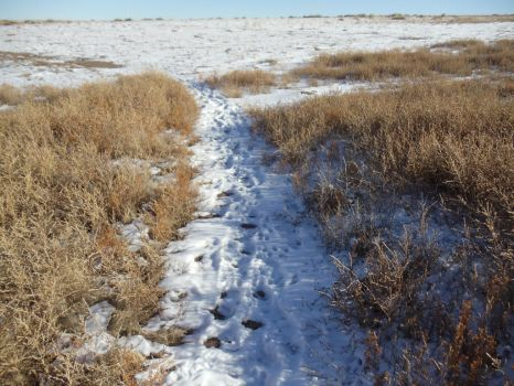 Snowy Trail by Benjamin-Phipps
