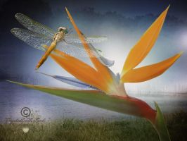 Dragonfly by PaintedOnMySoul