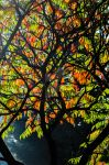 Autumn Colour by graphic-rusty