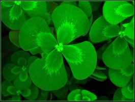 LUCKY DAY by THOM-B-FOTO