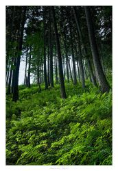 Sea of Green by AndreasResch