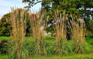 Witch's Grass by sweetz76