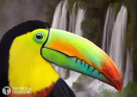 Tucan by ipawluk